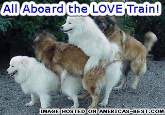 pics_group-dog-sex